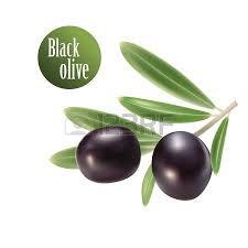 Vector olive oil Decorative olive branch For label pack Vector
