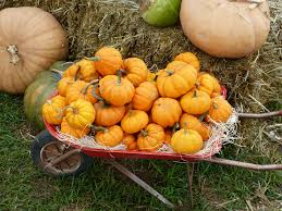 Pumpkin Patch Cleveland Mississippi by Tennessee Fall Festivals