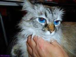 service cats service cats deziz world