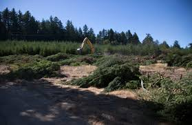 Santa Cruz Christmas Tree Farms by Construction Begins On Grand New Entrance To Castle Rock State Park