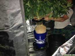 Sterilite Storage Cabinet Grow by Happy Jack U0027s 1st Hydro Grow Journal Dwc Led Nirvana