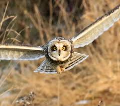 Chasing…Chasing…Chasing – Blairbirding 3716 Best All About Owls Images On Pinterest Barn Owls Nature Winter Birding Guide Lake Champlain Region 53 Flight At Night Owl Species Farm House England Stock Photos Images 1538 Owls Photos Beautiful Birds 2552 Give A Hoot Children Large White Carraig Donn Mayo Sghilliard Glass Studio Little Opens In Westport Food Drink Nnecticutmagcom 250 Love You Always