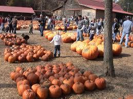 Kohala Pumpkin Patch Hours by Georgia U2014 Travelogue