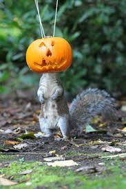 Squirrel Feeder Adirondack Chair by 29 Best Diy Squirrel Feeder Images On Pinterest Squirrel Feeder