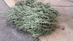 Baltimore County Christmas Tree Pickup 2015 by Waste Management Christmas Tree Collection Christmas Lights