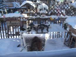 Bruna's Backyard Buddies Opinion On Car Lifts Cvetteforum Chevrolet Corvette Forum The Worlds Best Photos Of Backyard And Mate Flickr Hive Mind Look At This Backyard Buddies Zulily Today Zulily Outdoor Youtube Lot Of 8 Bunny Plates Crestley Collection For Free Embroidery Designs Cute Myphotography Night Owl Poetry Dorinda Duclos Locomotive Ghost Shawnwagarcom Unique Architecturenice Pin By Pam Smith Animals Pinterest Workshop Detail Buddies Skyspy Images Video