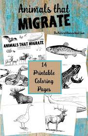 Animals That Migrate In Winter Printable Coloring Book
