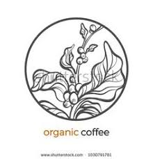 Vector Sticker Of Coffee Tree Branch With Bean Grain Botanical Art Line Drawing Logo