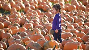 Pumpkin Patches Near Temple Texas by Cal Poly Pomona Celebrates 25 Years Of The Pumpkin Festival