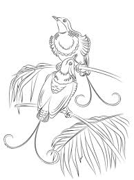 Bird Of Paradise Coloring Pages