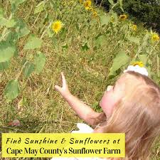 Pumpkin Patch Nj Monmouth County by Farms Archives Jersey Family Fun