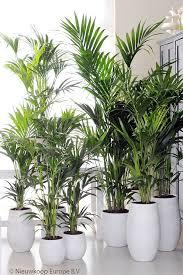 plantes pour bureau plantes vertes pour bureau plante a fleur interieur maison
