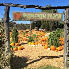 Mission Valley Pumpkin Patch by The 10 Best Pumpkin Patches In San Diego Care Com Community