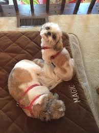 Pampered Pets Bed And Biscuit by Pampered Pet Services Llc Pet Sitting U0026 Midday Dog Walking