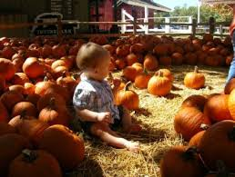 Apple Hill Pumpkin Patches Ca by Best Pumpkin Patches In Southern California K Earth 101