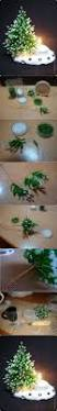 Publix Christmas Tree Napkin Fold by 99 Best Christmas Images On Pinterest Christmas Recipes