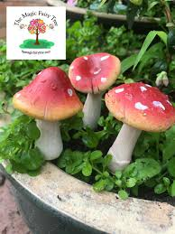 Set Of 3 10cm Toadstool Mushroom Stakes Terrariums Fairy Garden Decor  Fairies Red Toadstool Table Masquespacio Designs Adstoolshaped Fniture For Missana Mushroom Kids Stool Uncategorized Chez Moi By Haute Living Propbox Event Props Fniture Hire Dublin How To Make A Bistro Set Garden In Peterborough Swedish Woodland Robins Floral Side Magentarose Toadstools Fairy Garden