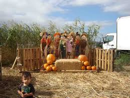 Waimanalo Pumpkin Patch And Corn Maze by Events Pumpkin Festival Event Is Held At Aloun Farms Each Year