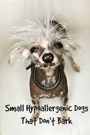 Hypoallergenic Shed Free Dogs by What Makes A Hypoallergenic Dog Hypoallergenic Free Dogs Dog