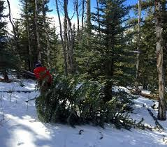 Christmas Tree Permits Colorado Springs by Blog Title