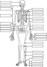 skeleton label worksheet with answer key science fun pinterest