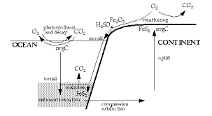 Define The Word Carbon Sink by Chapter 6 Geochemical Cycles