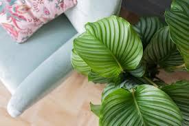 luftreinigende zimmerpflanzen fürs badezimmer plantsome