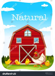 Chicken Red Barn Illustration Stock Vector 323842127 - Shutterstock Red Barn Clip Art At Clipart Library Vector Clip Art Online Farm Hawaii Dermatology Clipart Best Chinacps Top 75 Free Image 227501 Illustration By Visekart Avenue Of A Wooden With Hay Bnp Design Studio 1696 Fall Festival Apple Digital Tractor Library Simple Doors Cartoon For You Royalty Cliparts Vectors