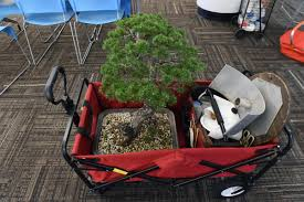 Baltimore County Christmas Tree Collection by Baltimore Bonsai