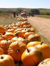 Pumpkin Patch Colorado Springs by Venetucci A Farm That U0027s Sincere Farm Beet
