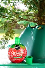 Miracle Gro For Christmas Trees 1