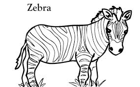 Zebra Coloring Pages 11printablecoloring