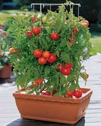 Vertical Pallet Container Garden Tumbler Tomatoes