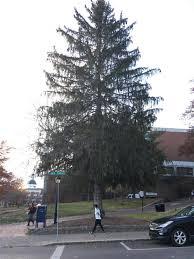 Plantable Christmas Trees Columbus Ohio by Disgraceful 10 Terrible Christmas Trees At Ohio Universitythe