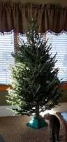 Balsam Christmas Tree Care by Garden Bite Blog Archive Christmas Tree Care