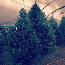 Here Is A Picture From 2017 When We Had Bunch Of Big Christmas Trees Standing
