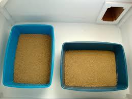 best cat litter boxes indoor outdoor cat litter box renee gallegos animal communicator