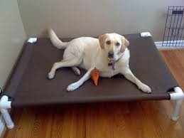 Coolaroo Dog Bed Large by Best 25 Raised Dog Beds Ideas On Pinterest Homemade Dog Bed