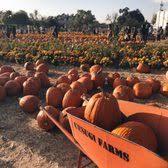 South San Jose Pumpkin Patch by Uesugi Farms Pumpkin Park 418 Photos U0026 218 Reviews Amusement