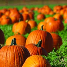 Pumpkin Patch Pasadena Area by Pasadena Ca Hulafrog Family Fun Zone With Santa Anita Pumpkin
