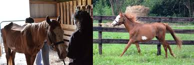 Horse Deals Equine Transformations : Coupon Advertising Ideas Bullhide Belt Coupons Deals Direct Heaters Equine Couture Joy Saddle Pad Smart Scrubs Promo Code Best Coupons Western Schools Transfer Window Deals 2018 Up To 85 Off Gucci Verified Couponslivesunday Horse Equine Traformations Coupon Advertising Ideas Horseloverz Com Free Shipping August Shrockworks Discount March 2019 Apple Calendar Back In The Saddle Coupon Bob Evans Military Most Updated Lovesaccom Coupon Code 10 15 Horseloverz Competitors Revenue And Employees Owler