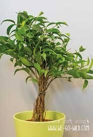 pflanzen im schlafzimmer die beim einschlafen helfen