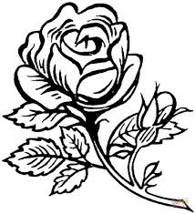 Draw Background Coloring Pages Of Roses About Beautiful Big Rose Page