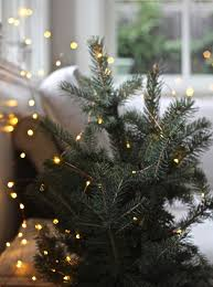 How To Pick Your Perfect Christmas Tree