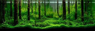 Aquatic Eden - Aquascaping Aquarium Blog Photo Planted Axolotl Aquascape Tank Caudataorg Suitable Plants Aqua Rebell Tutorial Natures Chaos By James Findley The Making Aquascaping Aquarium Ideas From Aquatics Live 2012 Part 4 Youtube October 2010 Of The Month Ikebana Aquascaping World Public Search Preserveio Need Some Advice On My Planned Aquascape Forum 100 Cave Aquariums And Photography Setup Seriesroot A Tree Animalia Kingdom Show My Our Lovely 28l Continuity Video Gallery Green 90p Iwagumi Rock Garden Page 8