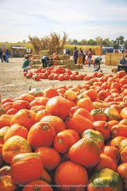 Chatfield Pumpkin Patch Hours by Life Denver Colorado Denverherald Net