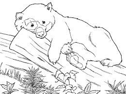 Download Free Printable Animal Coloring Pages Panda Or Print