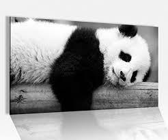 acrylglasbild 80x50cm panda pandabär bär süß tier baby