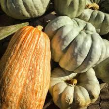 Dills Pumpkin Patch Columbus Ohio by Plant Matters Van Wilgen U0027s Garden Center