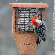 Suet Bird Feeders Seed Cake Bird Feeders For Attracting Clinging